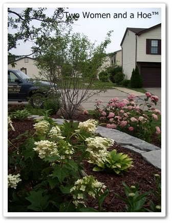 Ornamental trees for the landscape two women and a hoe - Decorative small trees for landscaping ...