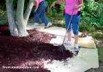 mulch process