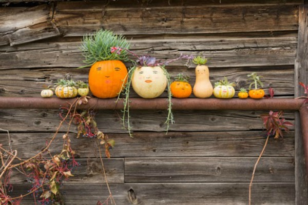 family-portrait-in-pumpkin-faces-and-succulents