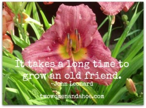 old-friends-daylilies-gardening
