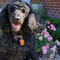 How to design dog-friendly gardens